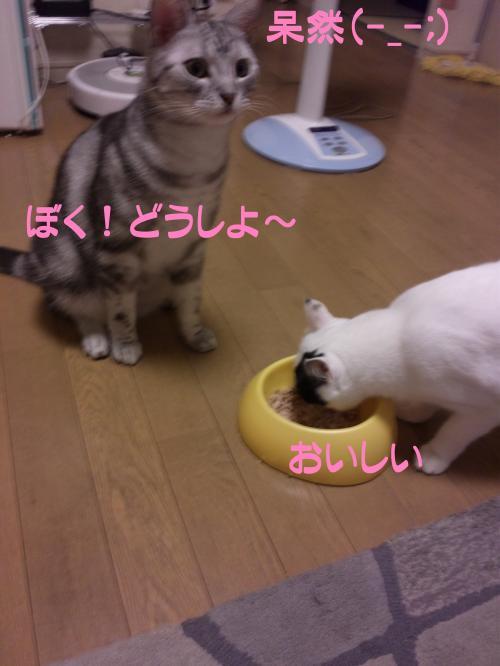 8_20111021132251.jpg