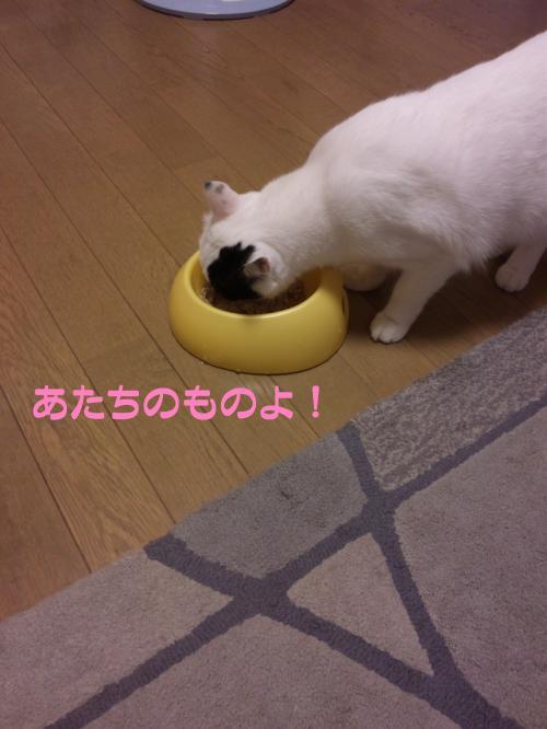 9_20111021132300.jpg