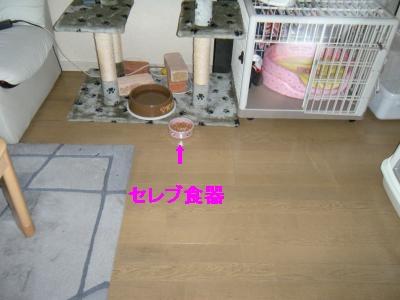 DSCN4850_convert_20110630161937_20110630162443.jpg
