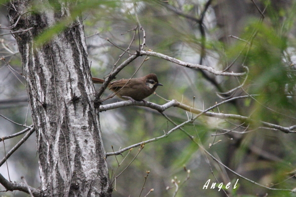 未判明野鳥(201204207266)