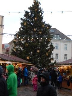 ラエコヤ広場のツリー