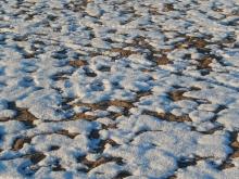 ビーチの雪