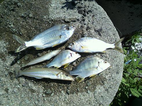 魚釣り釣果15