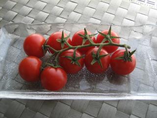 プチトマトマンション