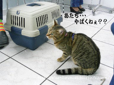 猫同士の会話