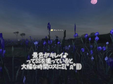 空と花の紫がキレイ(*´∀`)