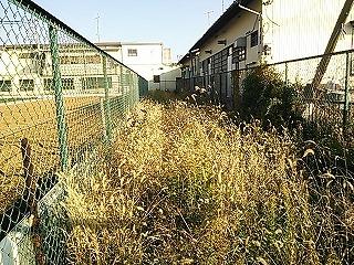 kachida929-3.jpg