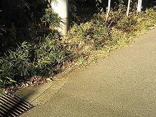 minamiyamada1-15.jpg