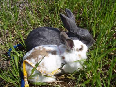 草の中で休憩する2羽