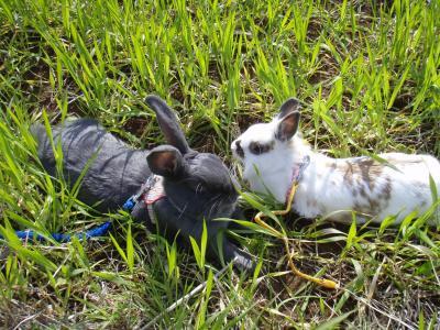 草の中で伸びるウサギ