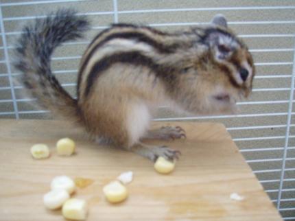 弱ったナッツが食べた!