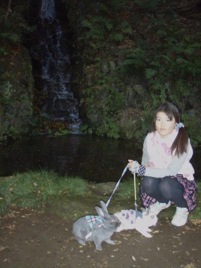 本土寺の庭園をうさんぽ