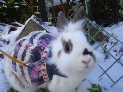 雪の庭でラビちゃん