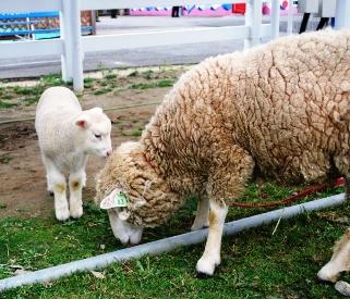 羊(お母さんと一緒2)
