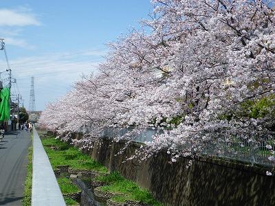 20100411神田川
