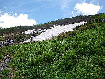 蝶の稜線の雪田