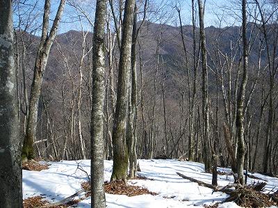 ウトウノ頭を目指して雪の残るブナ林を登る