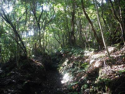 豊かな自然林