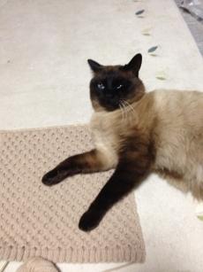 ドヤ顔のお邪魔猫。