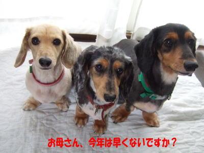 wanko0361.jpg
