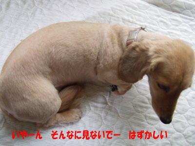 wanko0371.jpg