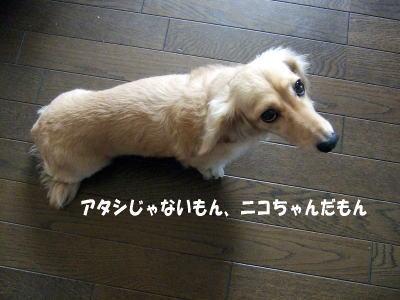 wanko0551.jpg