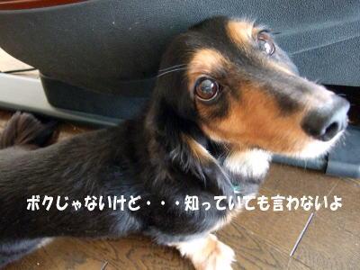 wanko0571.jpg
