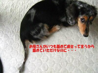 wanko0581.jpg