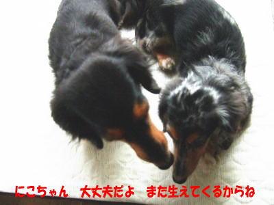 wanko0601_20110906122858.jpg