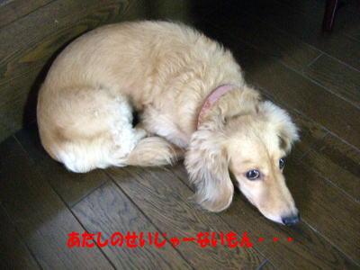 wanko0621_20110906123421.jpg