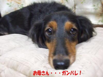 wanko0672.jpg