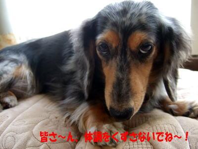 wanko0681.jpg