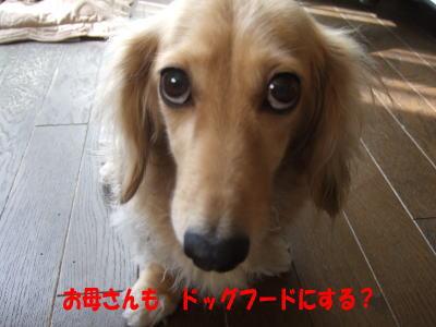 wanko0691.jpg