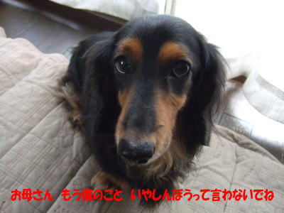 wanko0751_20111111093704.jpg