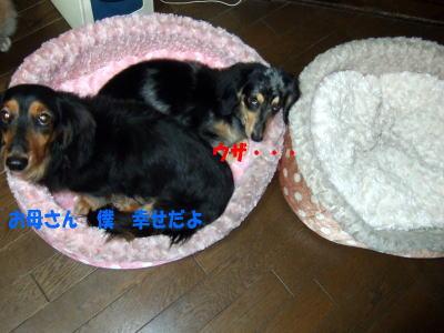 wanko0801.jpg