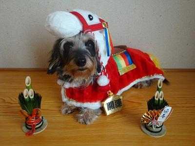 2014馬着ぐるみ(犬)