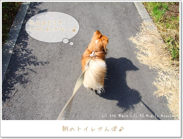 IMG_2504-20110606.jpg
