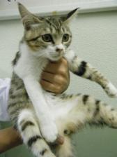 センター猫2-1