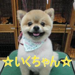 IMG_5284_20130524213346.jpg
