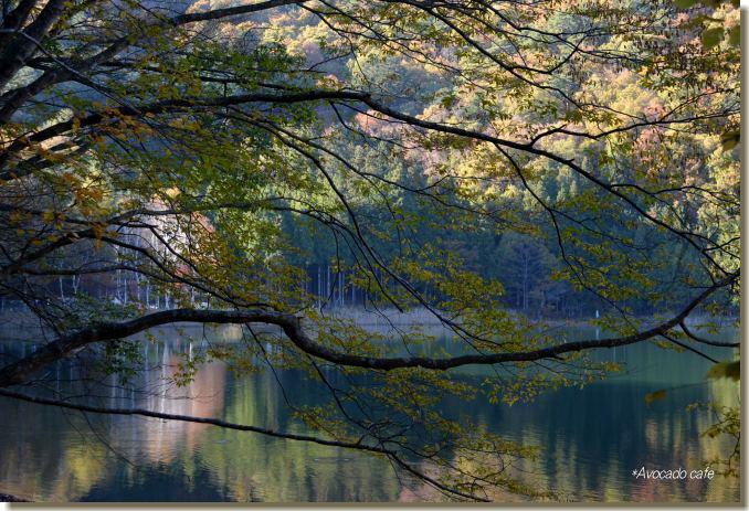 枝越しの水面