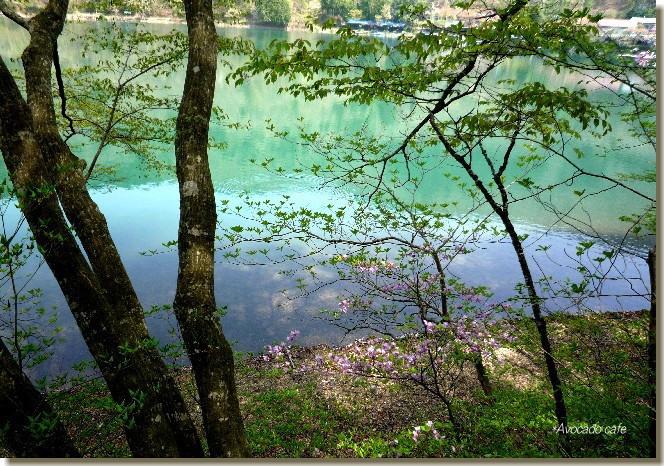 春の四尾連湖