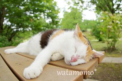 お昼寝ネコ