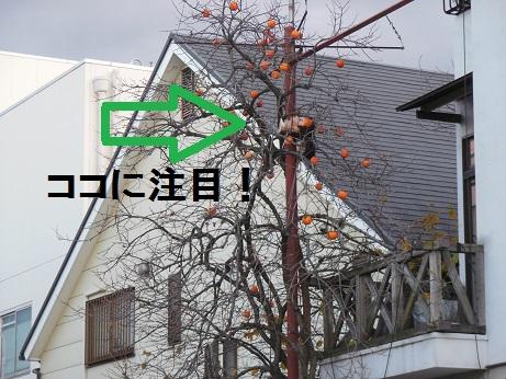 DSCN1447.jpg