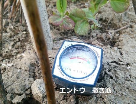 土のpH エンドウの撒き筋上