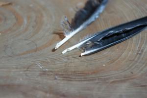 129巣箱奥のカラスの羽