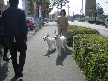 パンジャとリンお散歩3