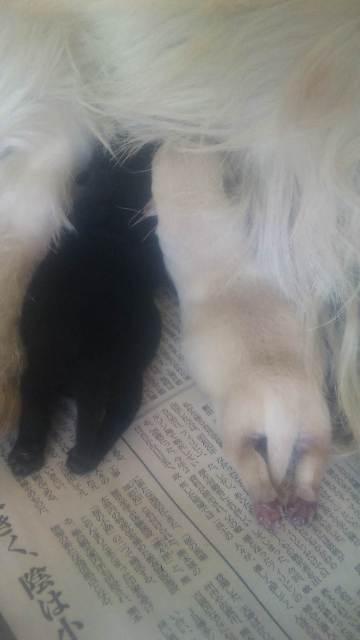 小麦パピー 2011.4.13