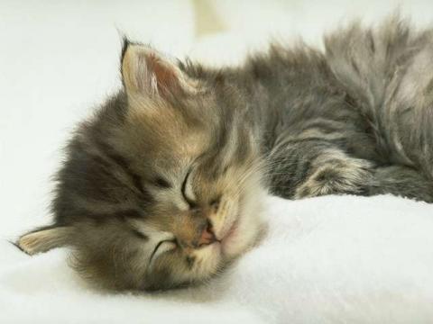 kitten101_convert_20110320065217.jpg