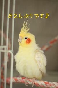 bf77アキコさん