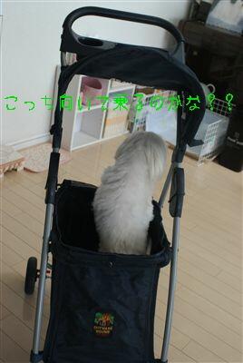 DSC03223_R.jpg